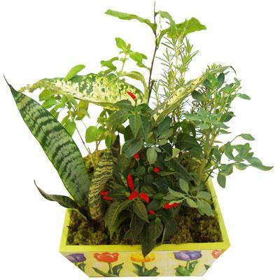 os-trevos-de-quatro-folhas-vasos-de-sete-ervas-e-flores-vermelhas-4