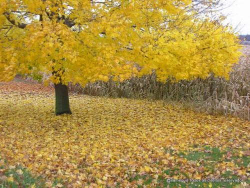 bom-dia-novembro-fall-500x375
