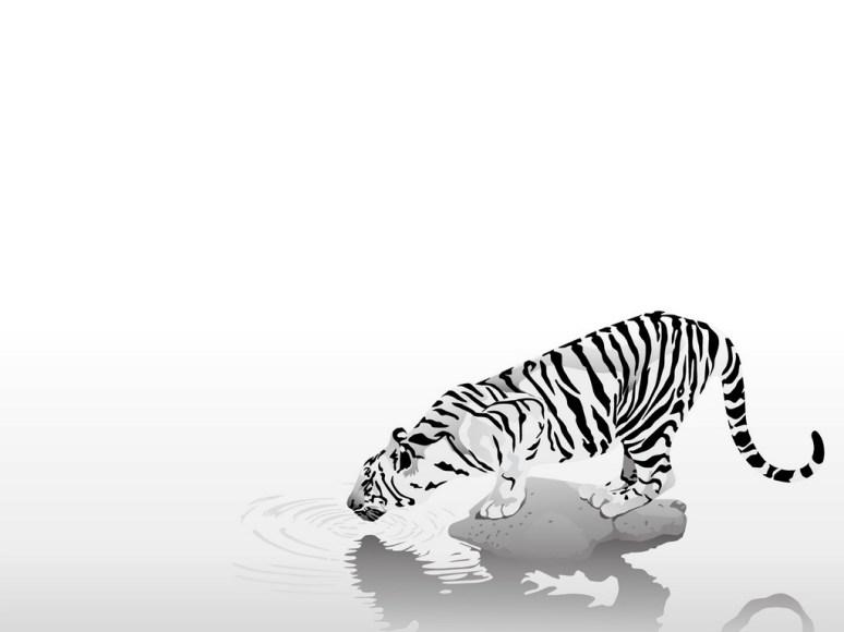 tigre-branco-no-rio-wallpaper-11321