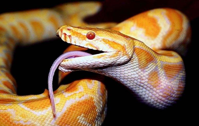 as-serpentes
