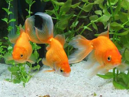 os-peixes