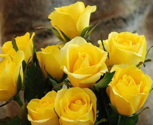 Rosas Amarelas 3-1