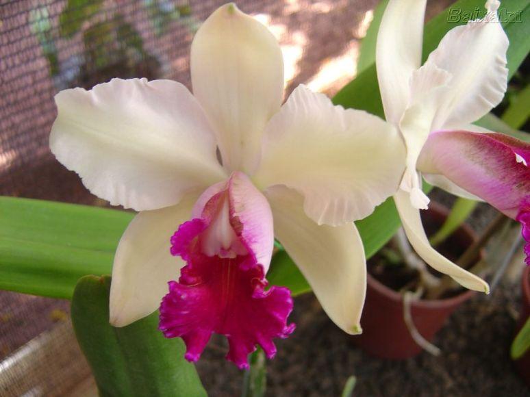 orquideas_002